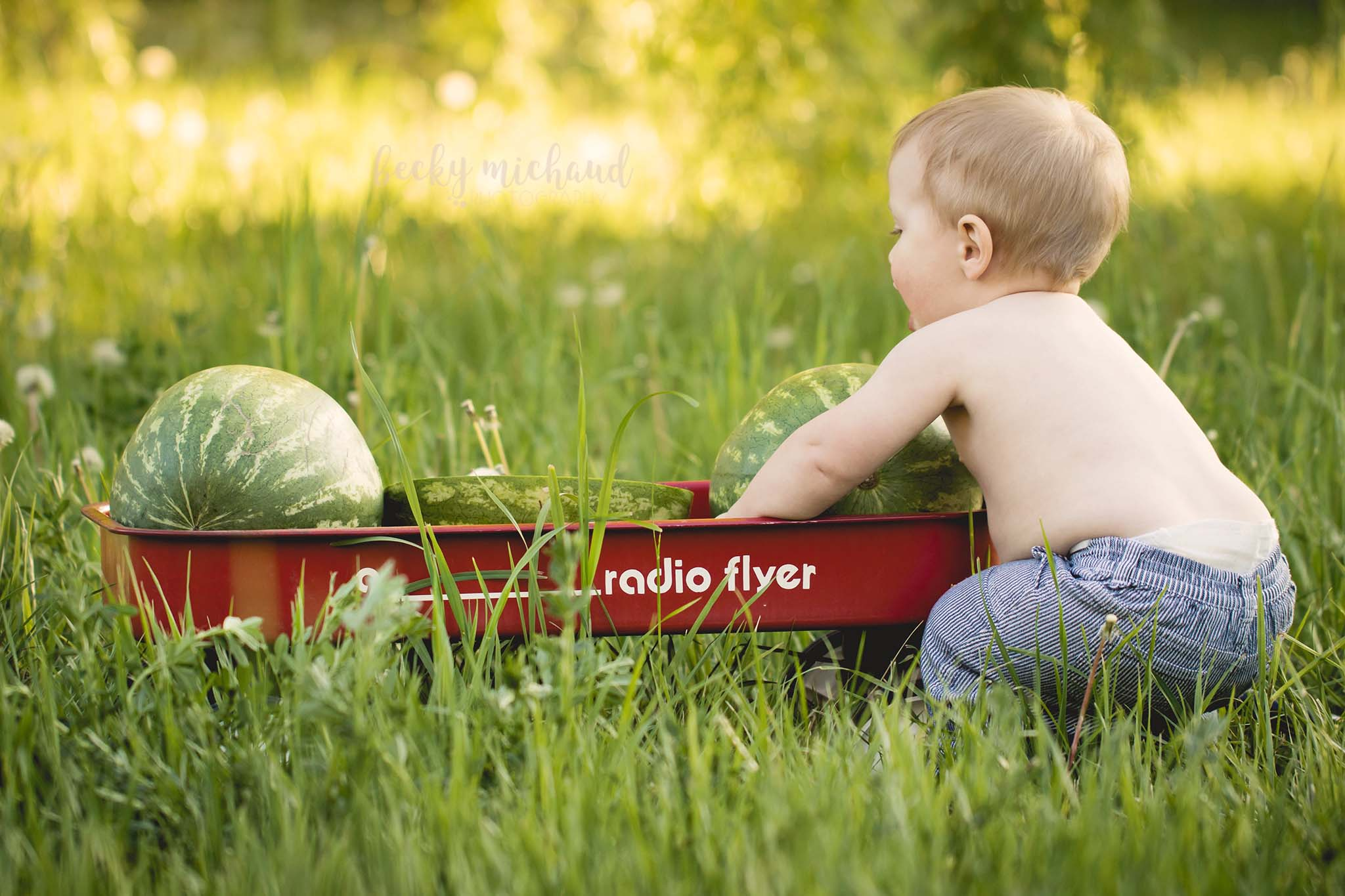 baby trying to lift a watermelon out of a wagon during a child photo session in Northern Colorado