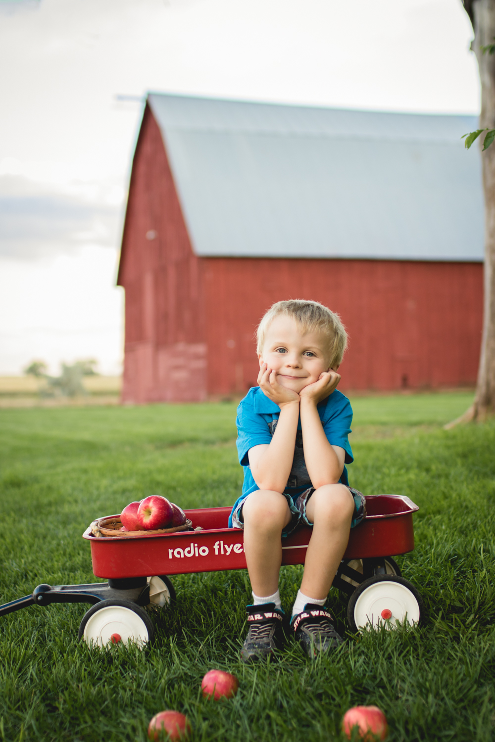 Boy sitting in a red wagon with a basket of apples in front of a red barn in Fort Collins
