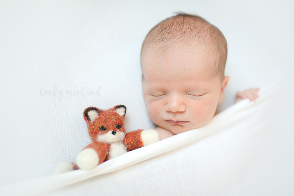 A baby boy snuggles with a stuffed fox during his newborn photo session in his Fort Collins home