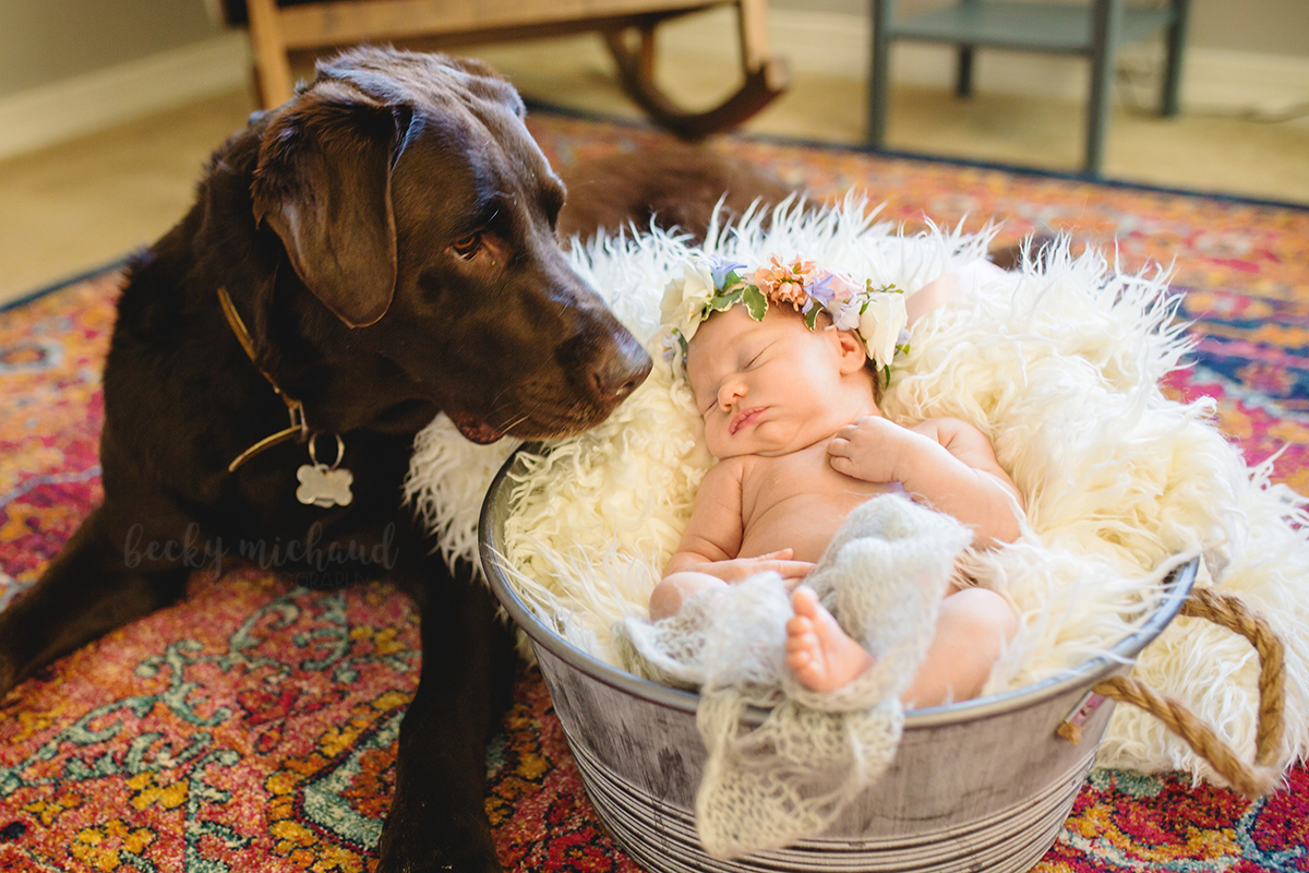 A black lab sits with a newborn baby girl during baby's newborn photo session in her Fort Collins home