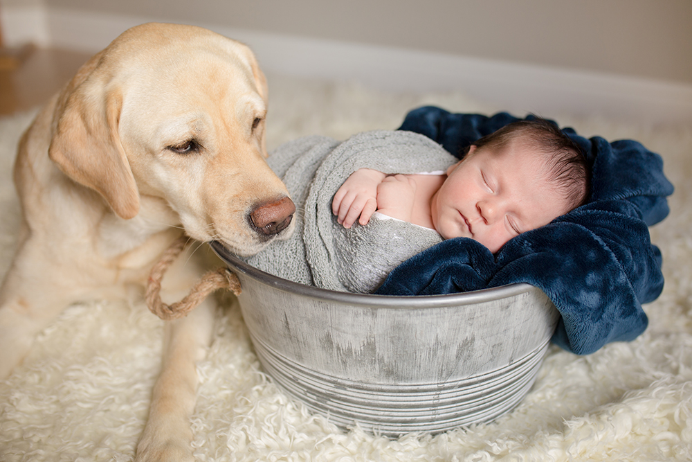 A newborn baby sleeps in a bucket while the family dog watches over him