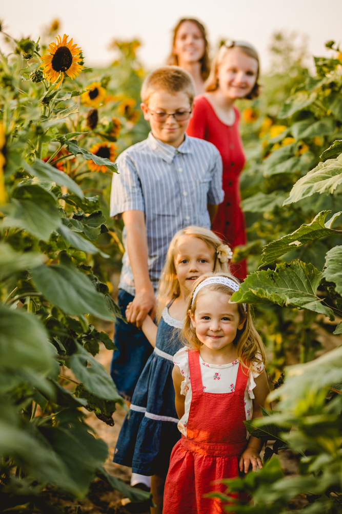 A little girl leads her family down a row of sunflowers in Windsor, Colorado